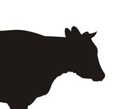 Silhouette of the cow. Of black color on a white background Stock Photo