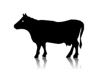 Silhouette of the cow Royalty Free Stock Image