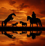 Silhouette cowboy with horses. In the sunset Royalty Free Stock Photos
