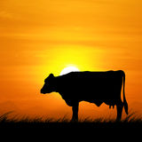 Silhouette cows standing on a meadow at sunset. stock photo