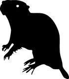 Silhouette of coypu Stock Images