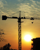 Silhouette crane. At the sunset time Royalty Free Stock Photography