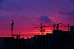 Silhouette of cranes Stock Photo