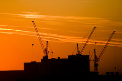 Silhouette of cranes Stock Images
