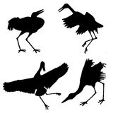 Silhouette of the cranes Royalty Free Stock Photography