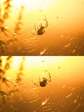 Silhouette of cross spider in his web Stock Photo