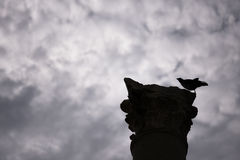 Silhouette crow on a column. Silhouette crow on a column in ancient city of agora Izmir Basmane Turkey Royalty Free Stock Photo