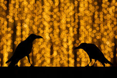 Silhouette crow with festive blur bokeh elegant abstract backgro Stock Photography