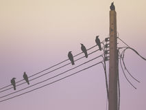 Silhouette of a crow on pillar electric line in the morning light. Retro color image, Silhouette of a crow on pillar electric line in the morning light Stock Photography