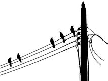 Silhouette of a crow on pillar electric line Stock Images