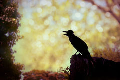 Silhouette of a crow on stone over blurred abstract background. Stock Images