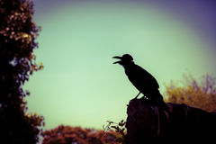 Silhouette of a crow on stone over nature background. Cross proc Royalty Free Stock Photography