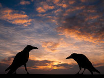 Silhouette crow with sunset for Halloween background Royalty Free Stock Image