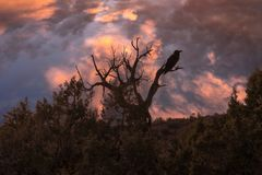 Silhouette of a crow and tree with a brilliant sunset. Stunning silhouette of a crow and tree with a brilliant sunset and dramatic sky Stock Images