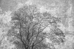 Silhouette crown of the tree on abstract grey background Stock Photos