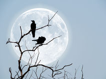 Silhouette of crows on dry wooden stick stock image