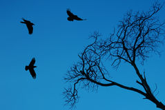 Silhouette of a crows flying against bright sky Royalty Free Stock Photos
