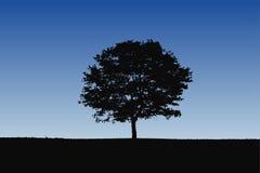 Silhouette détaillée d'arbre Photo libre de droits