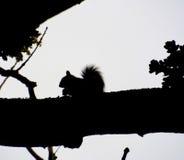 Silhouette d'écureuil Images stock