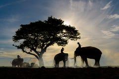 Silhouette d'éléphant de tour de trois hommes Photo stock