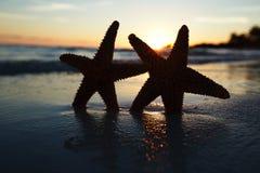 Silhouette d'étoiles de mer d'étoile de mer sur la plage de lever de soleil Image libre de droits