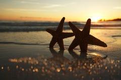 Silhouette d'étoiles de mer d'étoile de mer sur la plage de lever de soleil Image stock