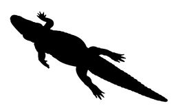 Silhouette d'alligator Photos libres de droits