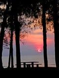 Silhouette d'arbre Photos libres de droits