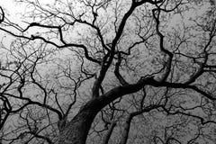 Silhouette d'arbre image stock
