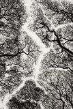 Silhouette d'arbre Images libres de droits