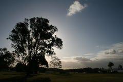 Silhouette d'arbre Photos stock