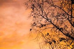 Silhouette d'arbre Images stock