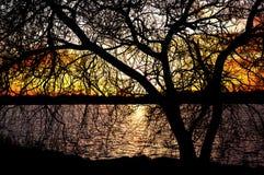 Silhouette d'arbre au coucher du soleil Images libres de droits