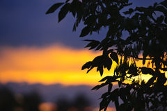 Silhouette d'arbre au-dessus de coucher du soleil photo libre de droits