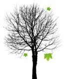 Silhouette d'arbre avec des lames illustration stock