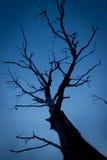 Silhouette d'arbre contre le ciel bleu-foncé Photos stock