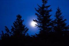 Silhouette d'arbre contre le ciel nocturne et la pleine lune Photographie stock libre de droits