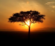 Silhouette d'arbre d'acacia Photographie stock libre de droits