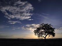 Coucher du soleil dans la savane Photo libre de droits