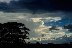 Silhouette d'arbre dans la soirée Images libres de droits