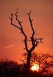 Silhouette d'arbre de Beautful au coucher du soleil Image stock