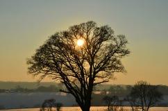 Silhouette d'arbre de coucher du soleil Photos libres de droits
