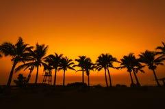 Silhouette d'arbre de noix de coco sur le coucher du soleil de paradis Images stock