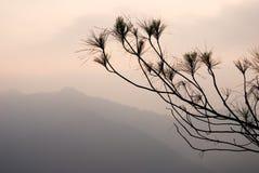 Silhouette d'arbre de pin sur des montagnes Photographie stock libre de droits