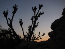 Silhouette d'arbre de Taksilla Photographie stock