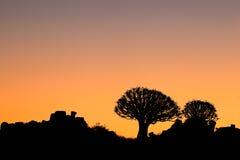 Silhouette d'arbre de tremblement Images stock
