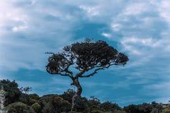 Silhouette d'arbre en Horton Plains National Park Sri Lanka Photo stock