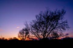 Silhouette d'arbre en soleil de soirée Photos stock