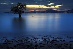 Silhouette d'arbre et de coucher du soleil sur la plage silencieuse Photo libre de droits