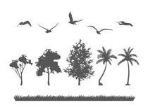Silhouette d'arbre forestier, d'oiseaux et d'herbes Photo stock